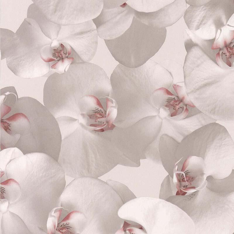 ORCHIDEES CŒUR ROSE – 51152103